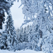 Winter forest in Harz mountains, Germany — Stock Photo #5059401