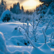 Winter forest in Harz mountains, Germany — Stock Photo #5059592