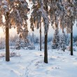Winter forest in Harz mountains, Germany - Stockfoto