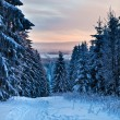 Winter forest in Harz mountains, Germany - Foto de Stock