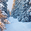 Winter forest in Harz mountains, Germany — Stock Photo #5075896
