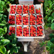 图库照片: Closeup of fresh organic strawberries