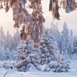 Winter forest in Harz mountains, Germany — Stock Photo #5086827
