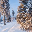 Winter forest in Harz mountains, Germany — Stock Photo #5096361