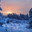 Winter forest in Harz mountains, Germany — Stock Photo #5096423