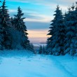 Winter forest in Harz mountains, Germany — Stock Photo #5107352