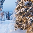 Winter forest in Harz mountains, Germany — Stock Photo #5113205