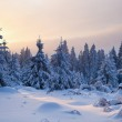 Winter forest in Harz mountains, Germany — Stock Photo #5113258