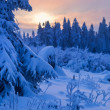 Winter forest in Harz mountains, Germany — Stock Photo #5113587