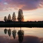 Leafless tree near lake on sunset — Stock Photo