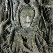Stock Photo: Stone buddhead traped in tree roots