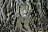 Stone budda head traped in the tree roots — Stockfoto