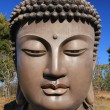 Buddha's head — Stock Photo