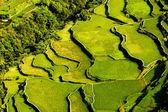 Hapao Rice Terraces — Stock Photo