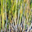 Grass — Stock Photo #3992183