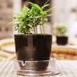 Small potted plant — Stock Photo