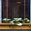 Wooden flower box in window — Stock Photo