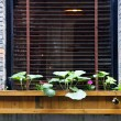 Wooden flower box in window — Stock Photo #4009647