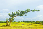 Bent Tree — Stock Photo