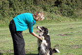 Border Collie with owner — Stock Photo