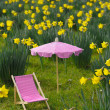 Daffodil meadow — Stock Photo