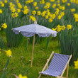Miniature sunchair and parasol in a daffodil meadow — Stock Photo #4048963