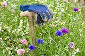 Gardeners gloves in a wild flower meadow — Stock Photo