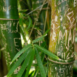 Stock Photo: Scratched bamboo