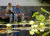 Senior couple sitting at a pond — Stock Photo