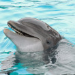 Smiling dolphin — Stock Photo #4097658