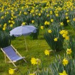 Miniature sunchair and parasol in a daffodil meadow - Foto Stock