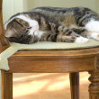 Sleeping cat on a chair - Stock Photo