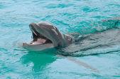 Smiling dolphin — Stock Photo