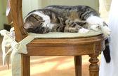 Gato dormindo em uma cadeira — Fotografia Stock