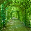 Green archway - Stock Photo