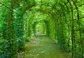 Green archway — Stock Photo