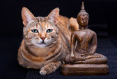 Cat Meditation — Stock Photo