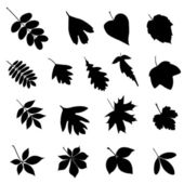Set of leaf silhouettes — Stock Vector