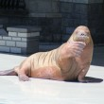 Walrus (Raised Flipper) — Stock Photo