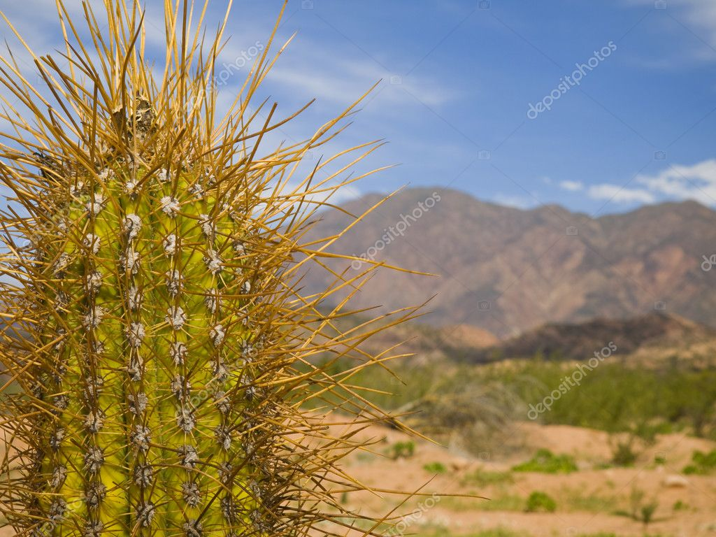 Long Spine Cactus Stock Photo Antonprado 4179067