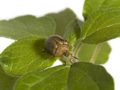 Bug on a plant — Stock Photo