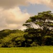 Stock Photo: Kauai Field