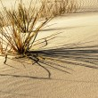 White sands — Foto de stock #3953838