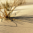 Foto Stock: White sands