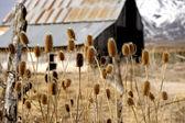 Moulton Barn — Stock Photo