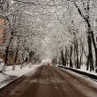 Stock Photo: Winter suburbroad