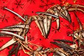 Kokosnoot ketting — Stockfoto