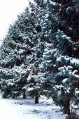 Vánoční strom ve sněhu — Stock fotografie