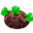 Toy frogs — Stock Photo #4736646