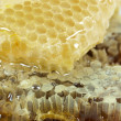 Royalty-Free Stock Photo: Honeycomb and honey
